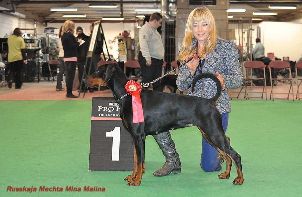 Dobermann Russkaja Mechta Mina Malina at the Xmas show 2013